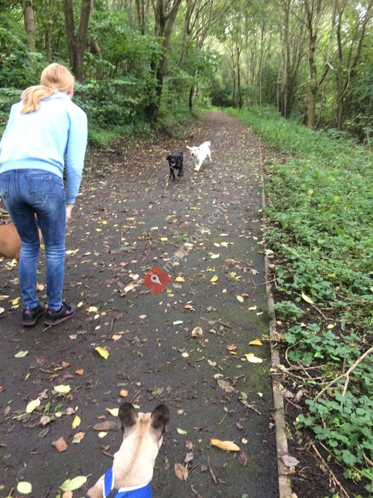 S & J Pet Services Dog Walking and Pet Care